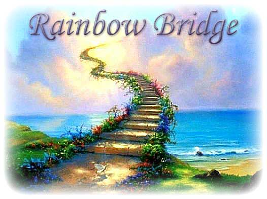 Image result for cats rainbow bridge